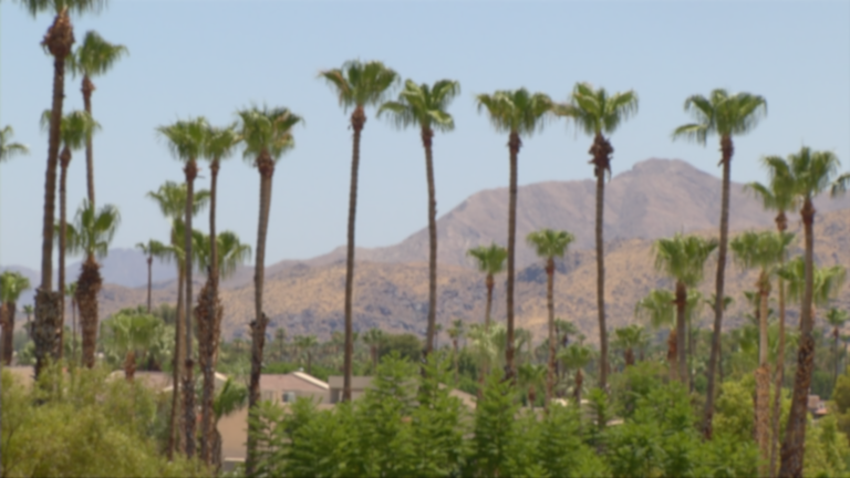 PSP_Tall Palms-Mountains_Day_7-6-17